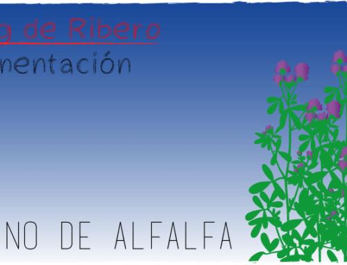 EL HENO DE ALFALFA