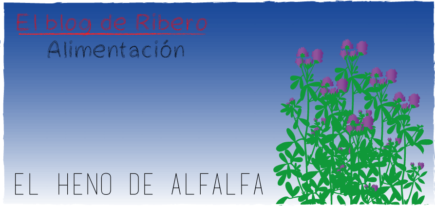 heno-de-alfalfa